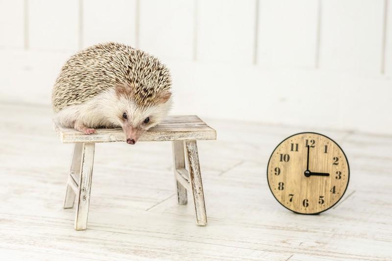 「時が経つのが早い」って感じてますか?