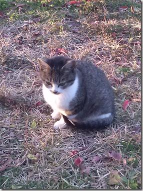 大学の猫 くろがもらわれていきました。