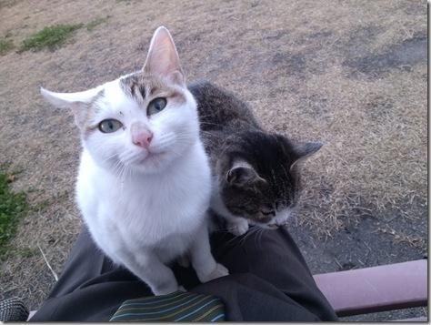 大学の猫 しろがもらわれていきました。